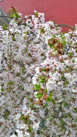 april flowers 2