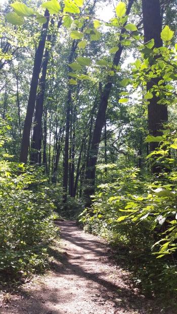 camping pathway