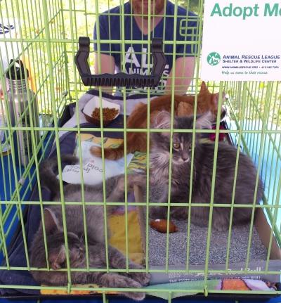 kitty adoption